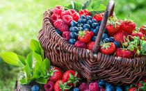 Какие ягоды помогают понизить давление?